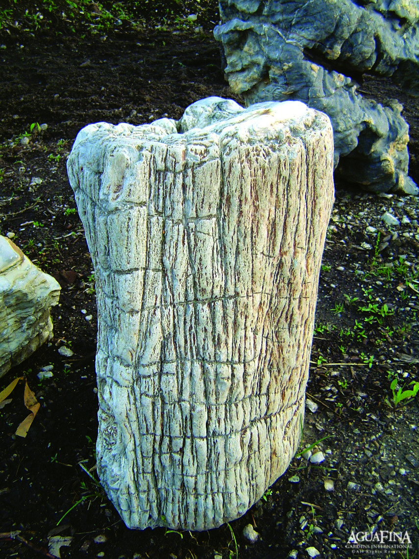 Pet Stone 2